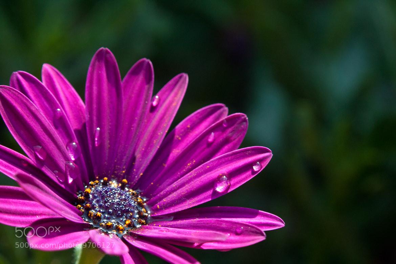 Photograph Violet by jose regaña on 500px