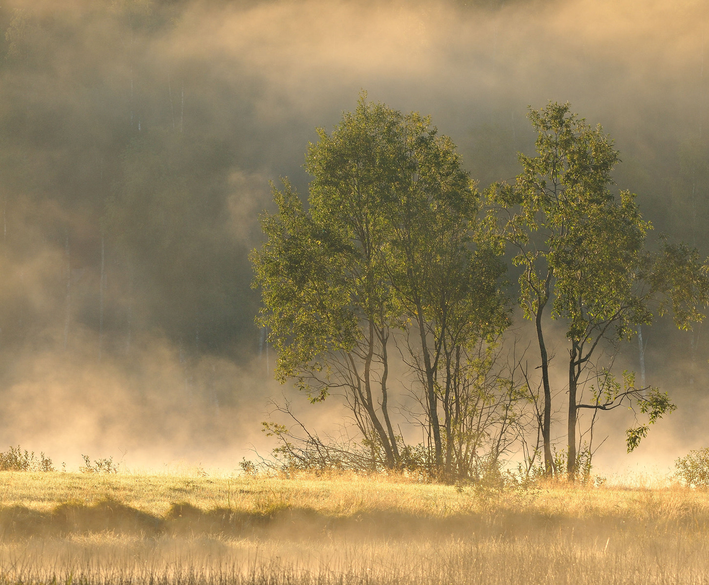 Photograph Fog and lake smoke by Ronnie Bergström on 500px