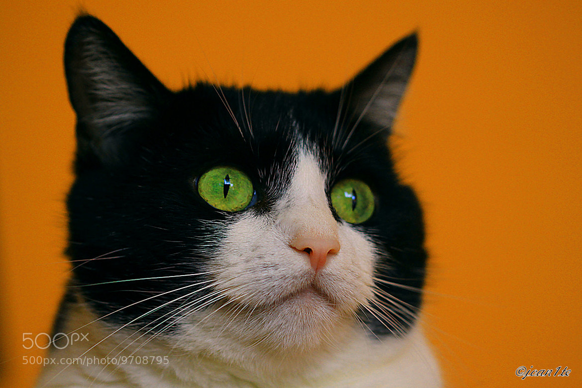 Photograph Green eyes by Jola Rz on 500px