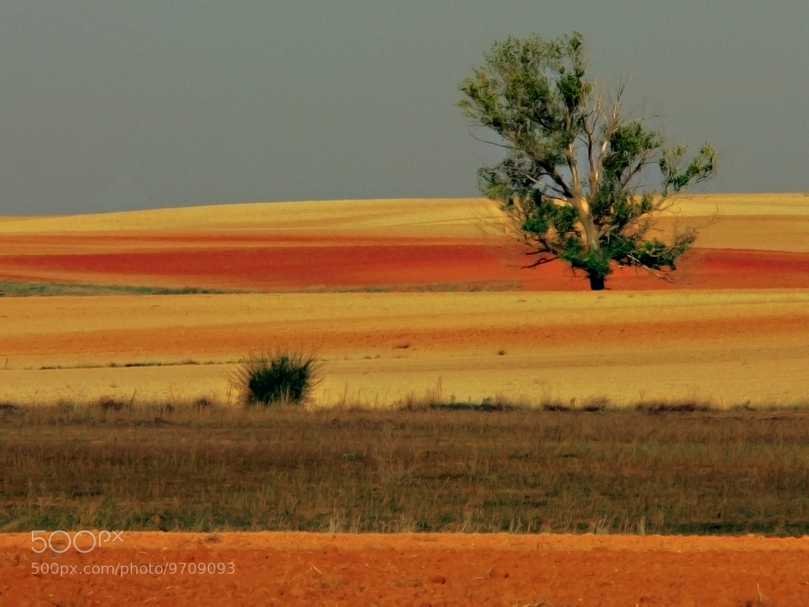 Photograph coloured fields by kiminur lurra on 500px
