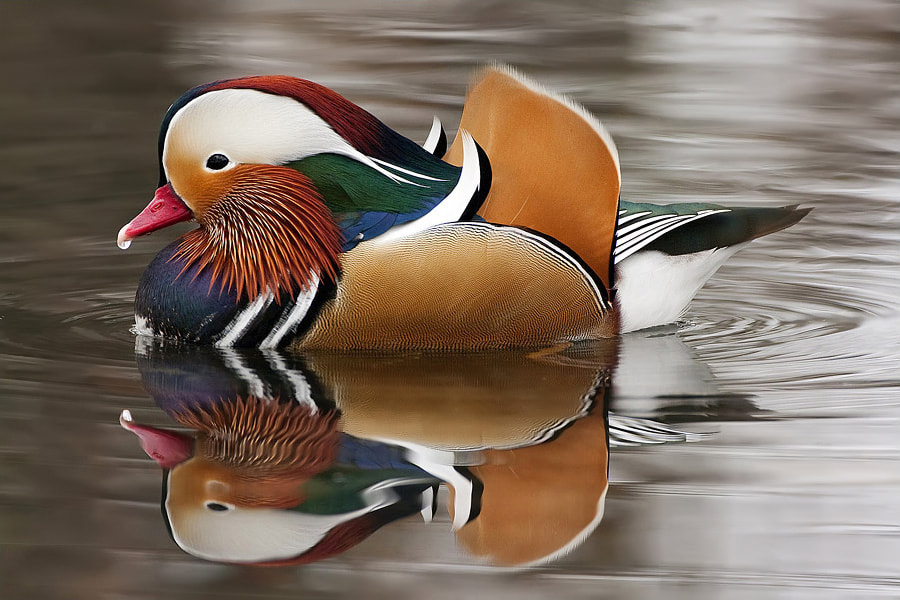Photograph Mandarin by Alessandro Terzi on 500px