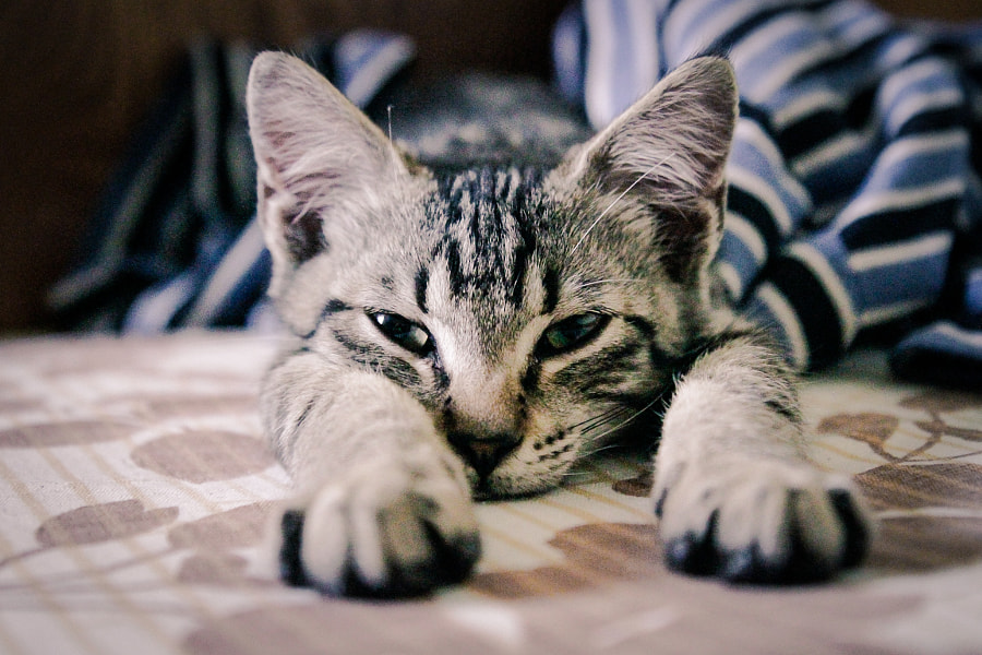 You Managed to Wake Me