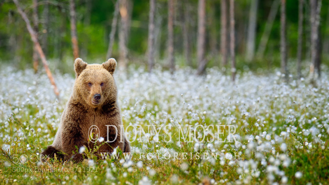 Photograph Cotton bear by Dionys Moser on 500px