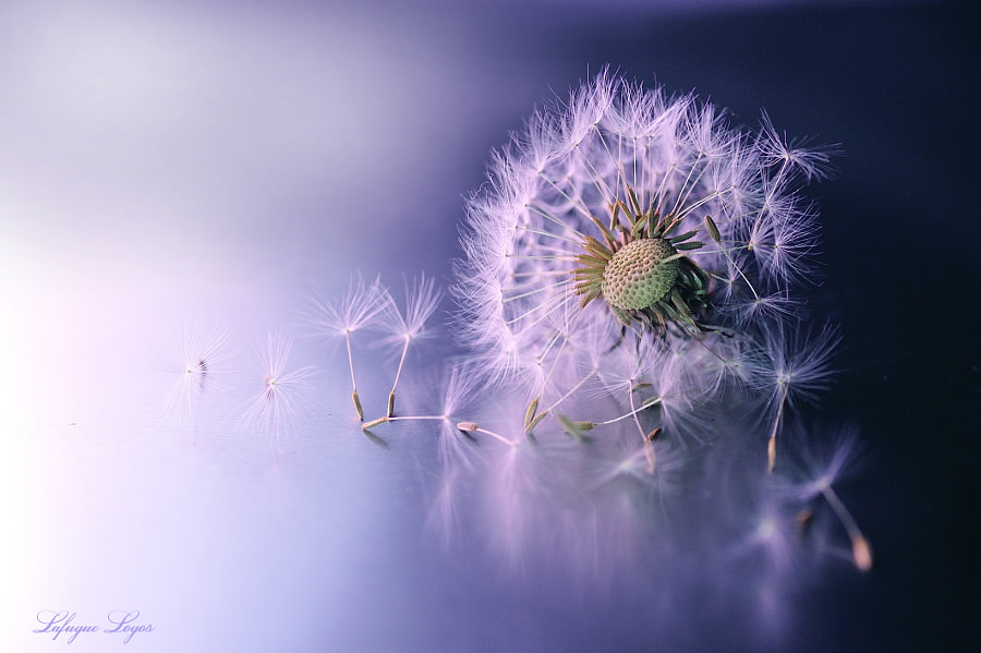 Transformation for Spring by Lafugue Logos   on 500px.com