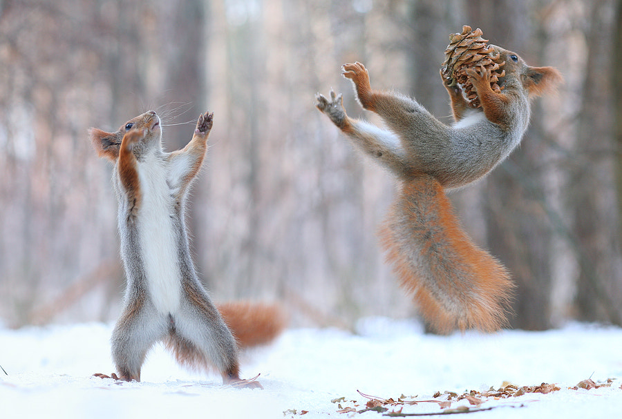 Wow !!! by Vadim Trunov on 500px.com