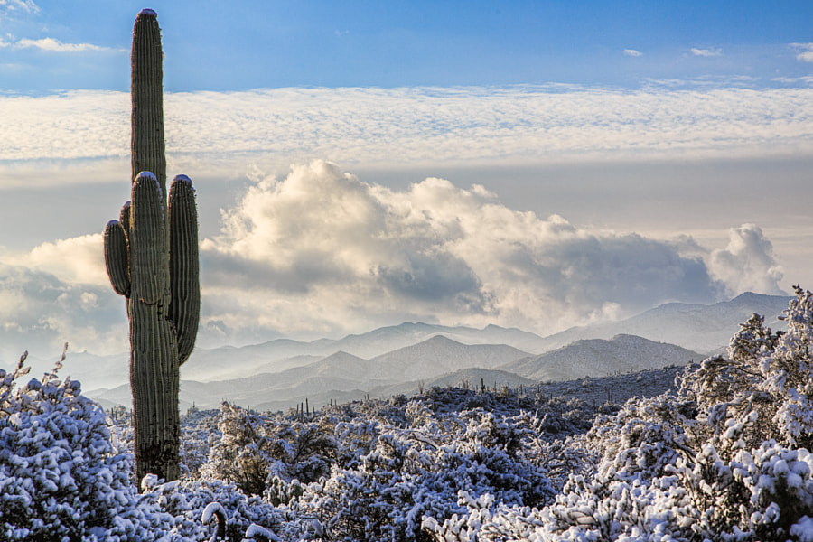 Snowy Desert Morning by David Bair on 500px.com