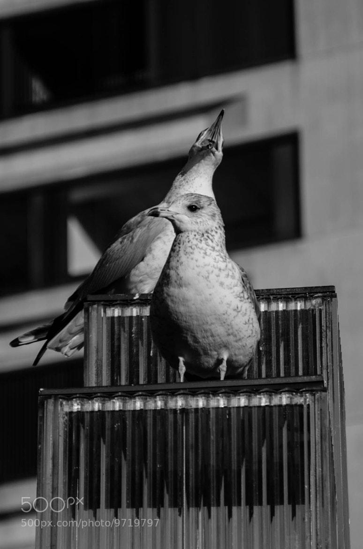 Photograph Seagulls by Camilo Suarez on 500px