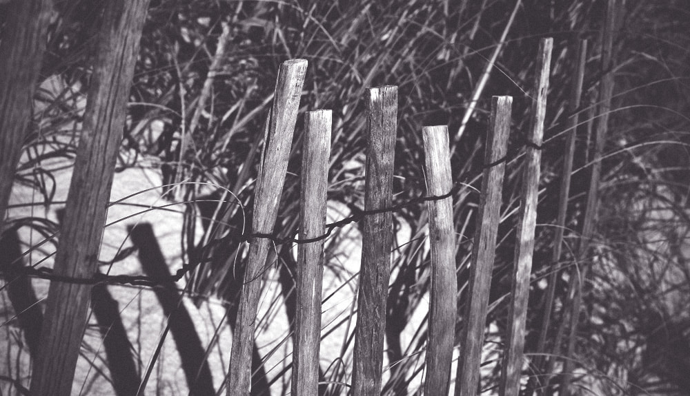 Photograph Sea Oat Fence by Matt Peevy on 500px