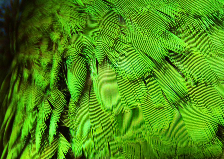 Feathers by Michael Fitzsimmons on 500px.com