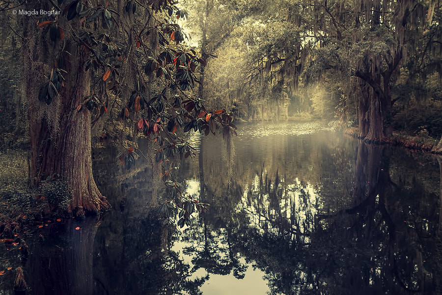 Photograph Southern Magic by Magda  Bognar on 500px