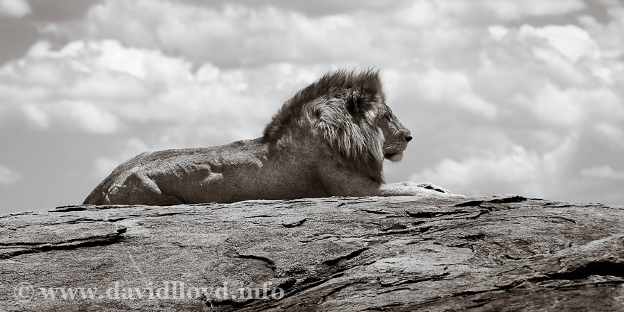 Photograph A Pride of Place by David Lloyd on 500px