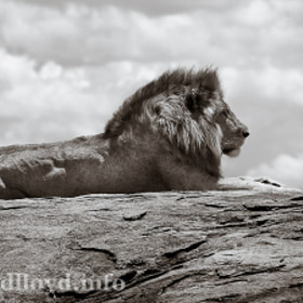 A Pride of Place by David Lloyd (davidlloyd)) on 500px.com