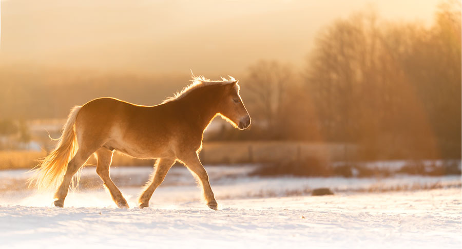 Moving by Clare Ahalt on 500px.com