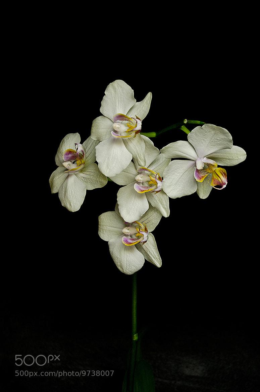 Photograph Orchidea by Quim teixidor on 500px