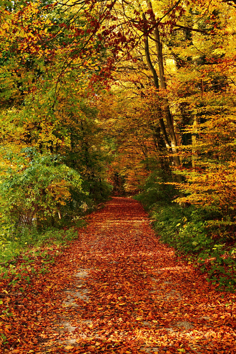 Photograph Autumn Passage by Philipp K on 500px