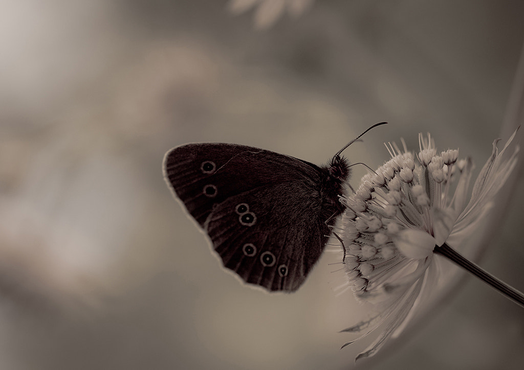 Photograph Butterfly on a Flower by Allan Wallberg on 500px