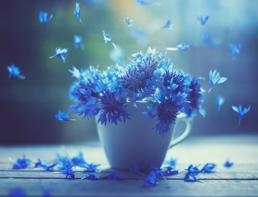 Photograph Air dancers by Ashraful Arefin on 500px
