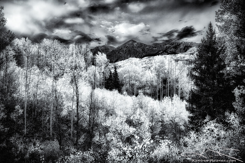 Photograph Amidst the Aspens by Kevin Reaves on 500px