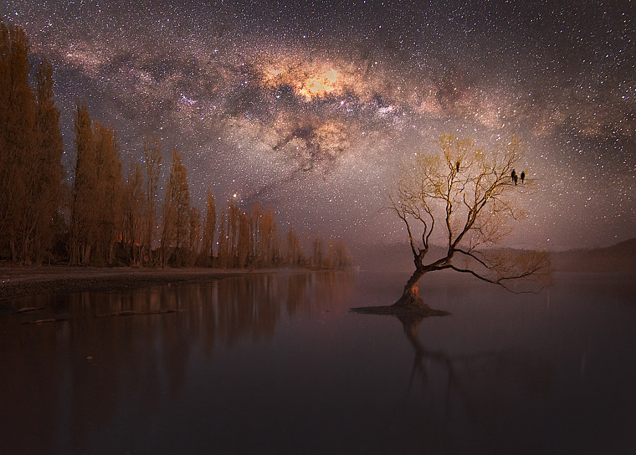Photograph Nocturne by Jesse Summers on 500px