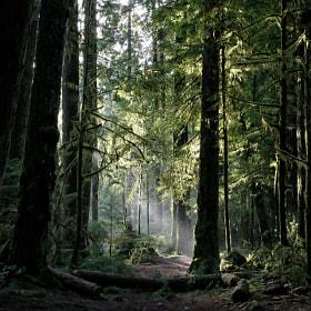 sunlight peeking through denser forest