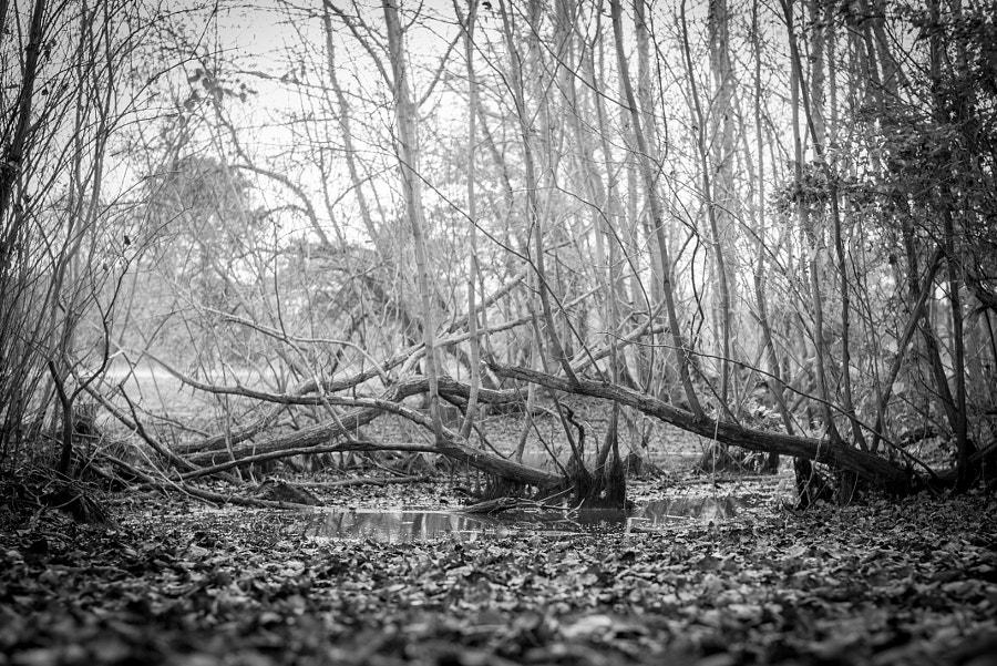 ____Gloomy Pond____