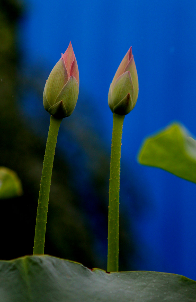 Photograph twins by Chen suyu on 500px