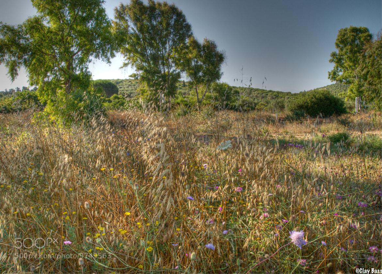 Photograph campo di fiori by Clay Bass on 500px