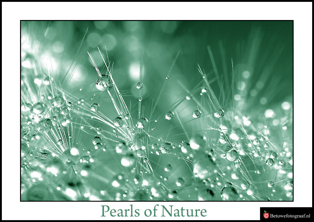 Photograph Jewels of Nature by Marinus Keyzer de on 500px
