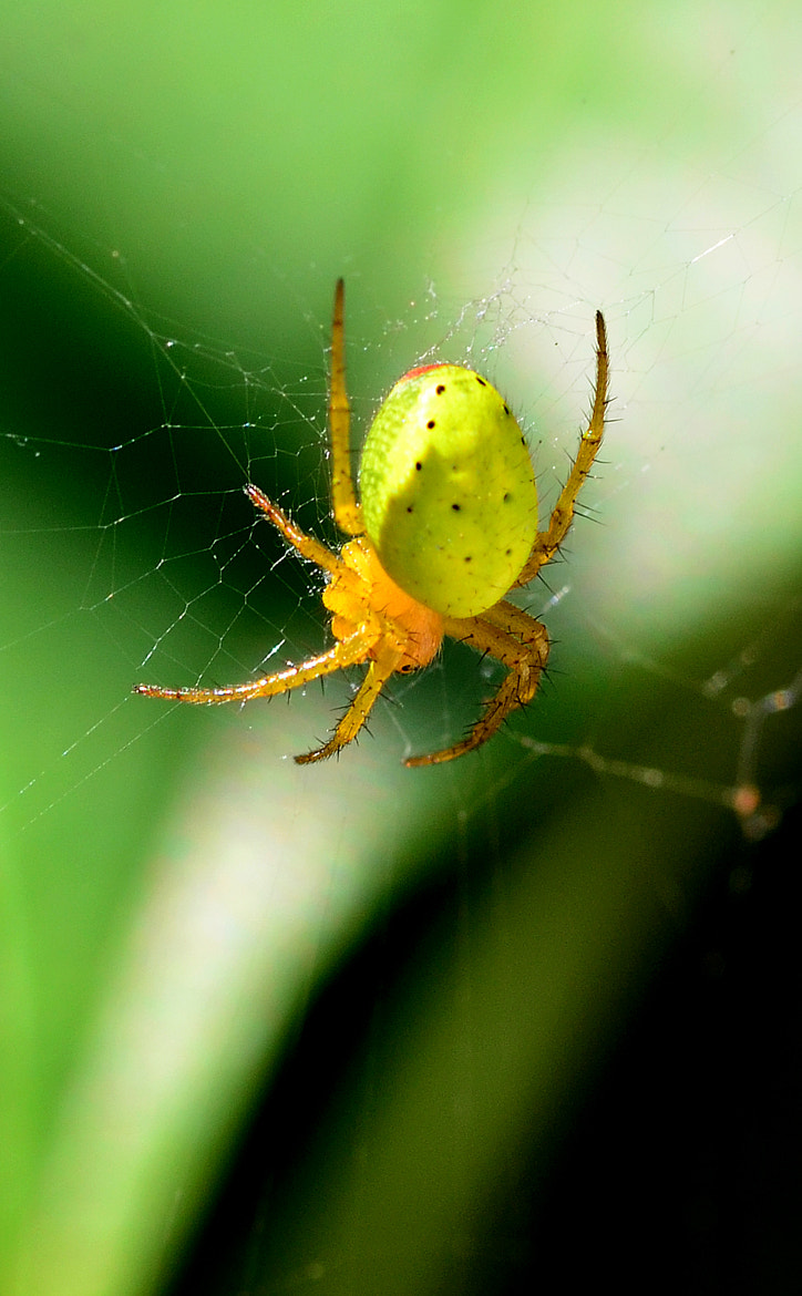 Photograph SPIDER by Sébastien Chambre on 500px