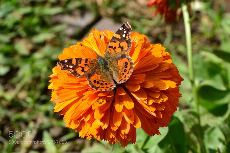 Photograph Mariposa Mimetizada by Lucia Gerlero on 500px