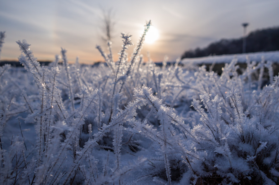 Frost by Andrei Hrabun on 500px.com