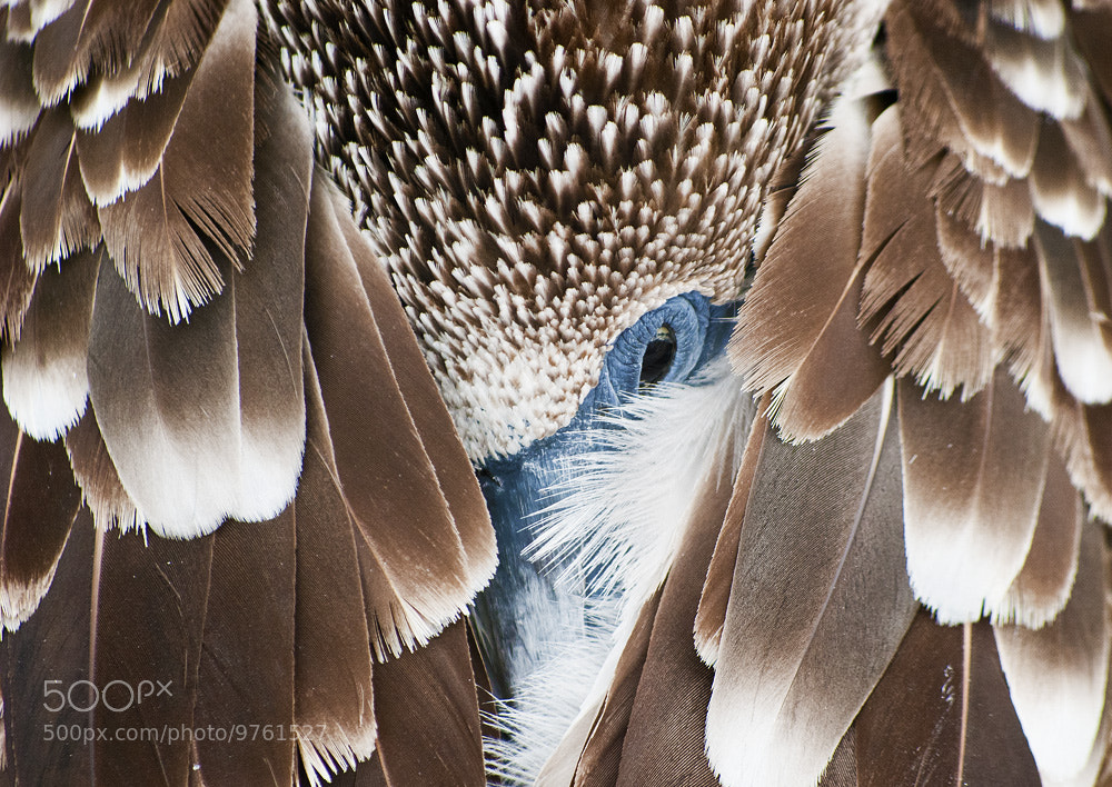 Photograph Sleep With One Eye Open by Tim Snell on 500px