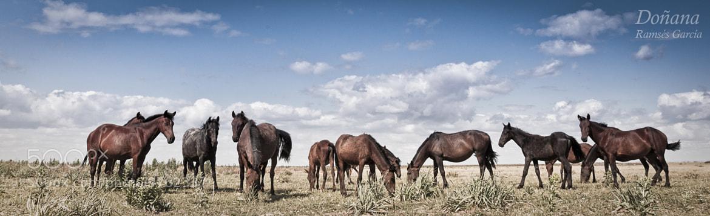 Photograph Doñana National Park, Spain by Ramses García Fernández on 500px