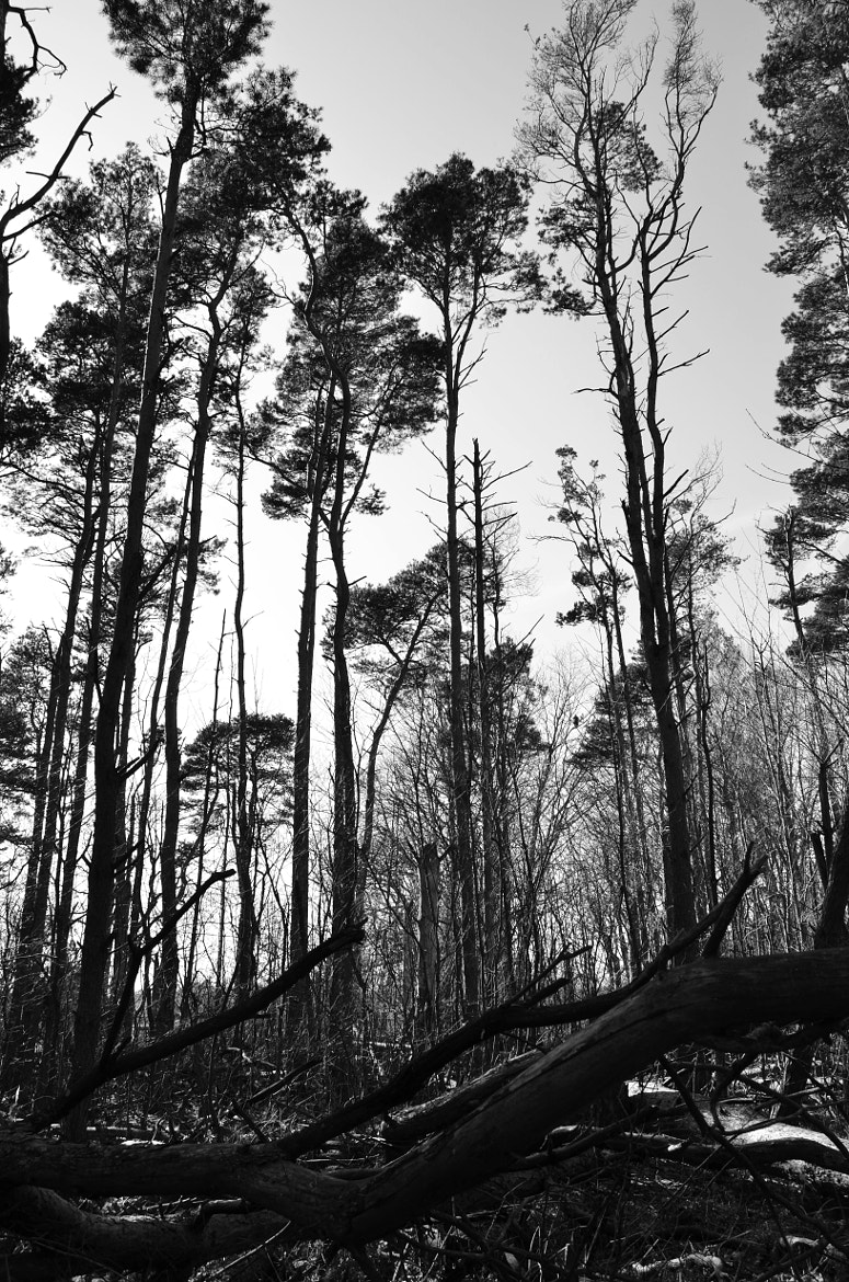 Photograph Tall Trees by Tim Frazier on 500px