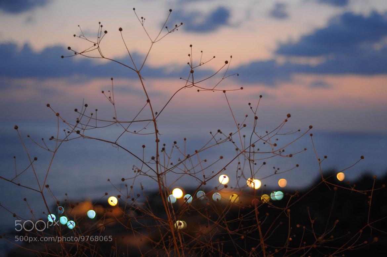 Photograph Spring Dream !  by Assma  Abohelal on 500px