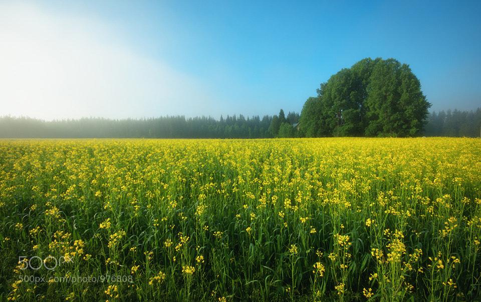Photograph Yellow Fields by Joni Niemelä on 500px