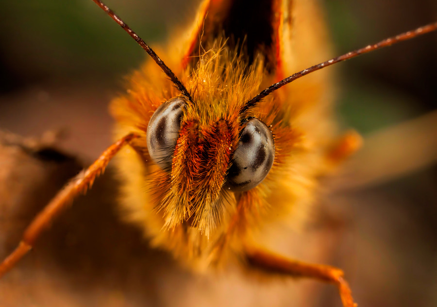 Photograph Looking at you by Chris Atkinson on 500px