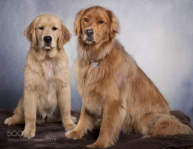 Photograph Dog Portrait by scott eggimann on 500px