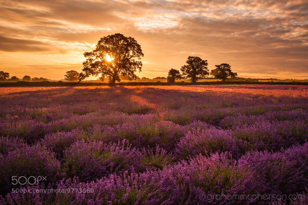 Photograph Lavender Coloured Dawn by Graham McPherson on 500px
