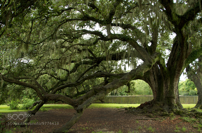 Photograph Treebeard by Steven Blackmon on 500px