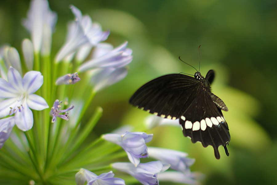 Photograph Butterfly by Zoltan Toth on 500px