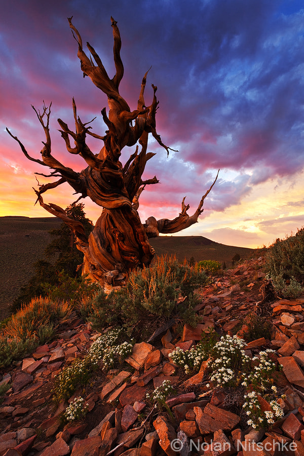 Photograph An Evening with the Ancients by Nolan Nitschke on 500px