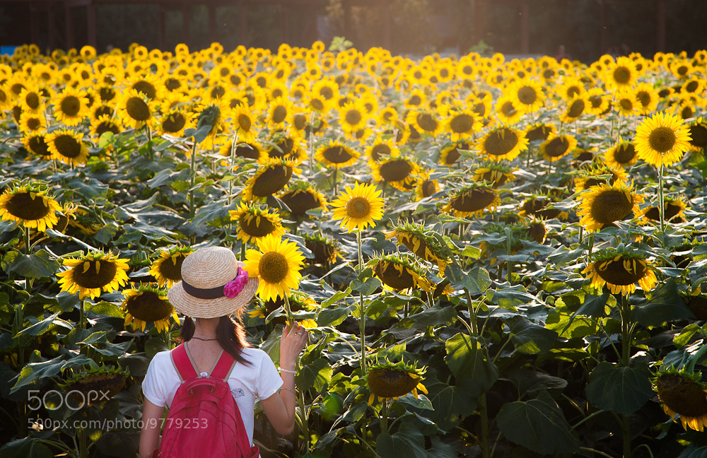 Photograph sunflower by Young River on 500px