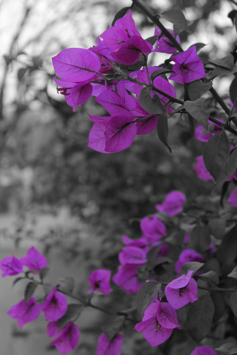 Photograph Violets <3 by Hanoof Iskander on 500px
