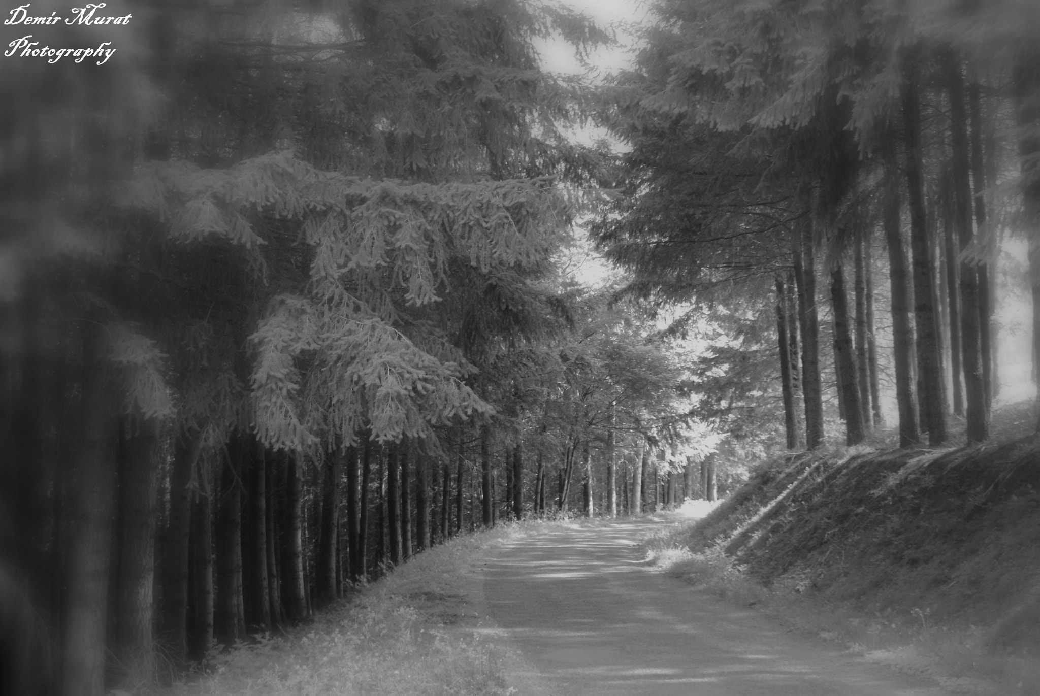 Photograph The life is a long road by Murat Demir on 500px