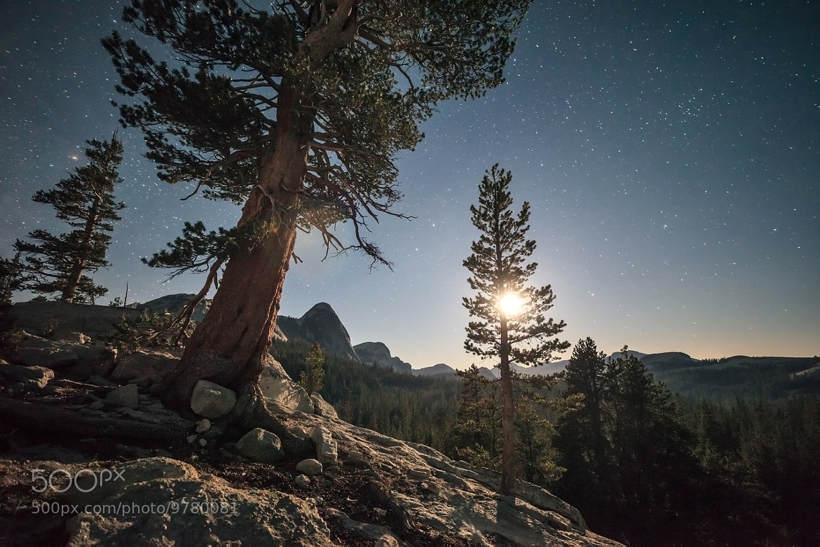 Photograph Tuolumne meadows moonset  by Josh Owens on 500px