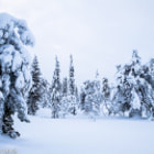 Snow Forest in Lapland