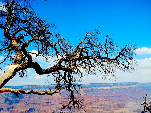 Photograph Grand Canyon by Carra Riley on 500px