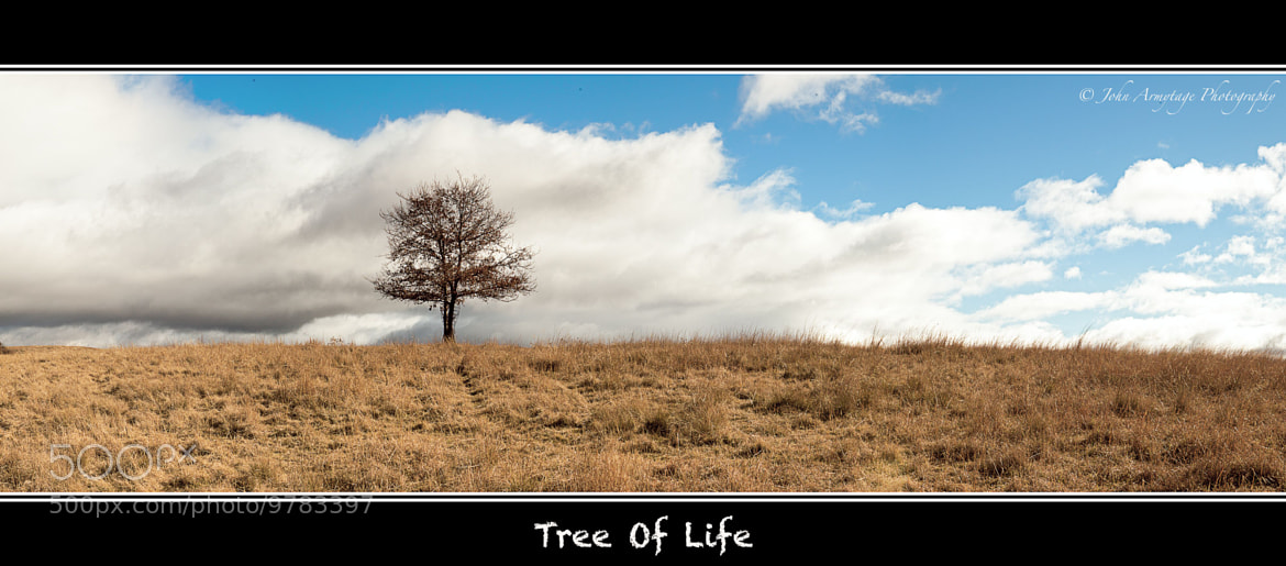 Photograph Tree Of Life by John Armytage on 500px