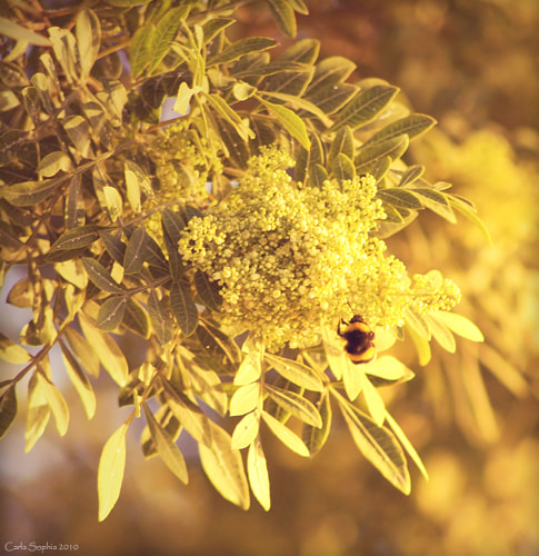 Photograph Bee working by Carla Sophia on 500px